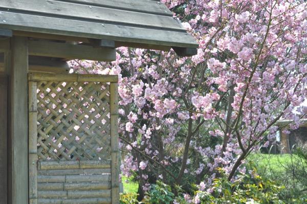 maulevrier-kyudojo-printemps-entree-cerisier