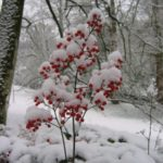 maulevrier-parc-oriental-hiver-nandine